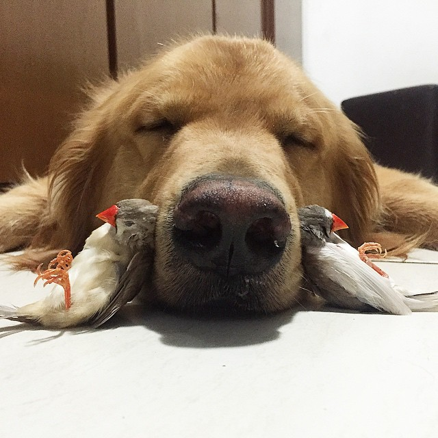 dog and birds unusual friendship