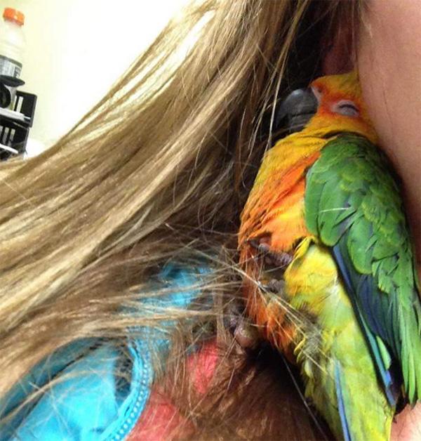 bird takes nap in girls hair