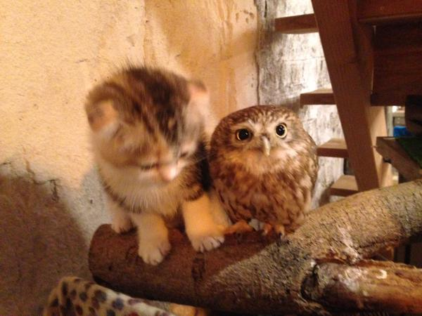 kitten and owlet