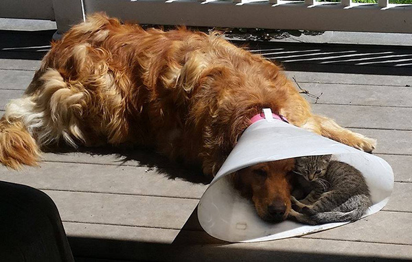 cat and dog in cone