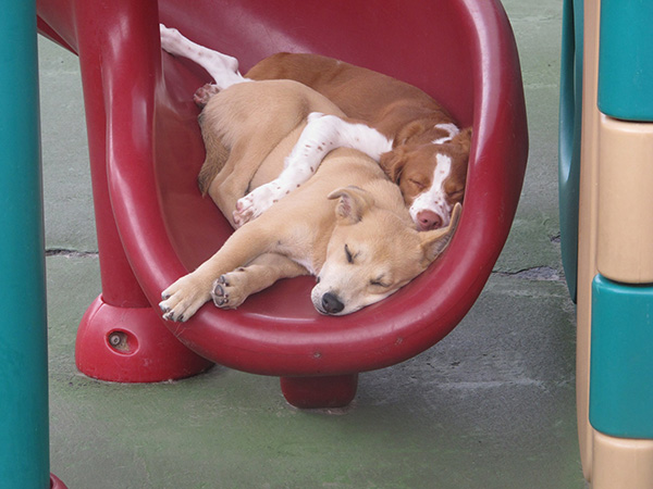 doggy day care snuggling