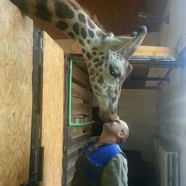 giraffe and his keeper