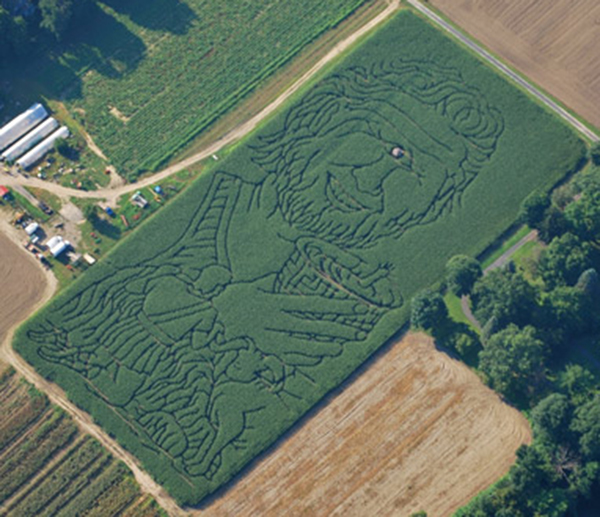amazing corn mazes