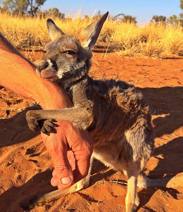 kangaroo hug