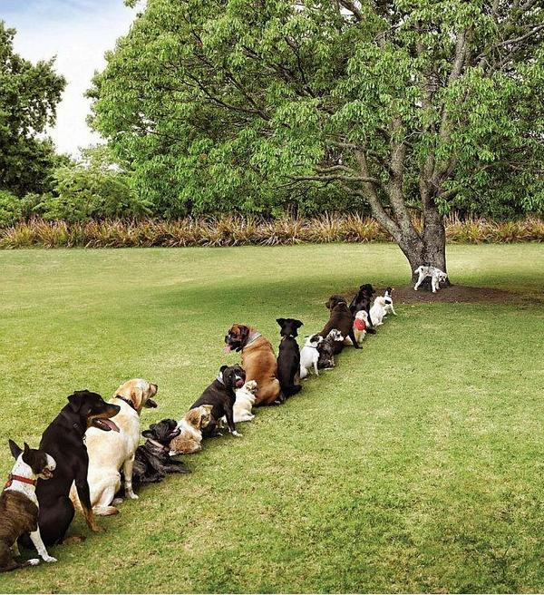 dogs in line to pee on tree