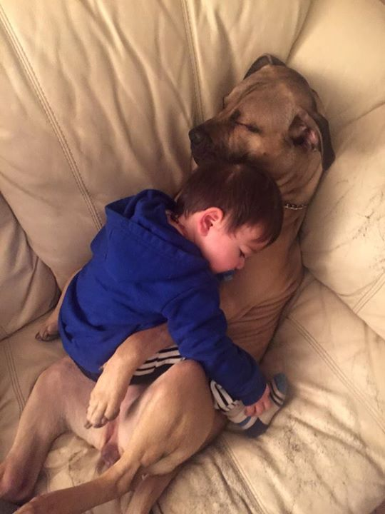 boy and dog sleeping