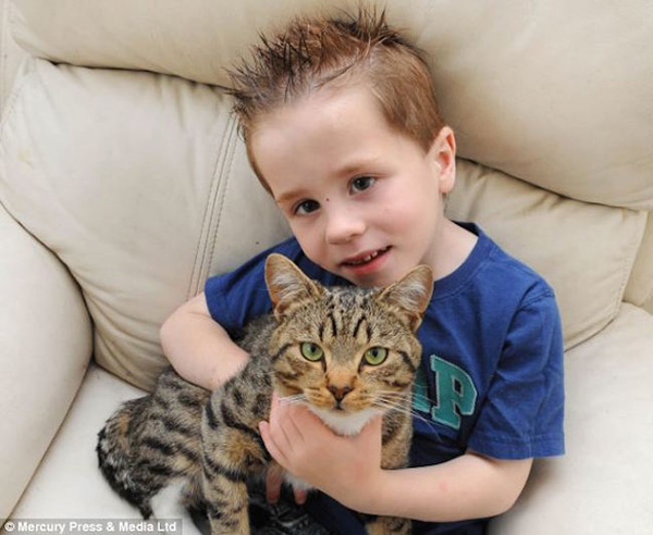 cat saves kid from bully
