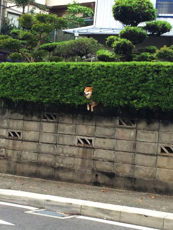 dog stuck in bush