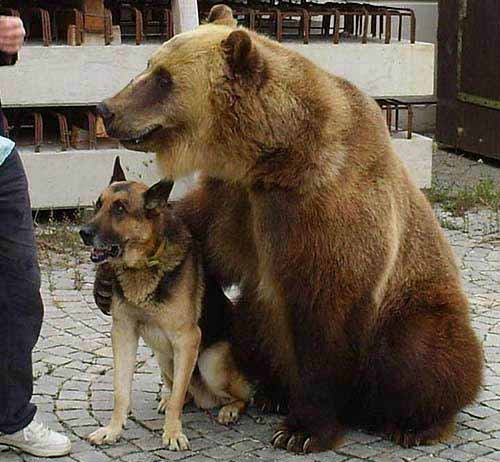 bear holding dog
