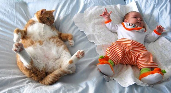 cat imitates baby