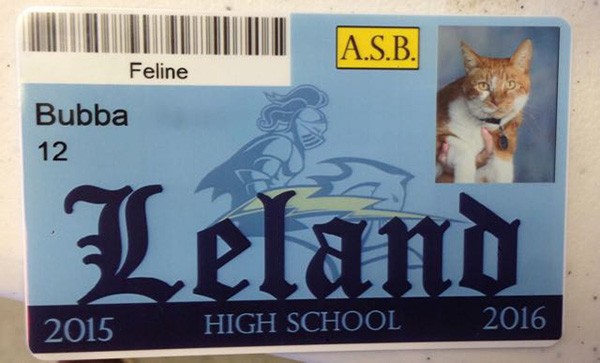 bubba cat has own ID at school