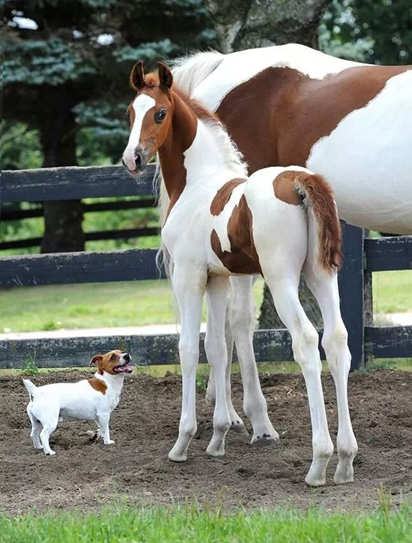 matching dog and horses