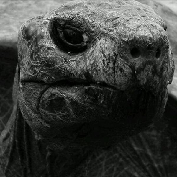 oldest tortoise