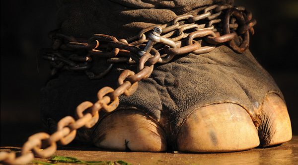 wild animals banned in circus netherlands