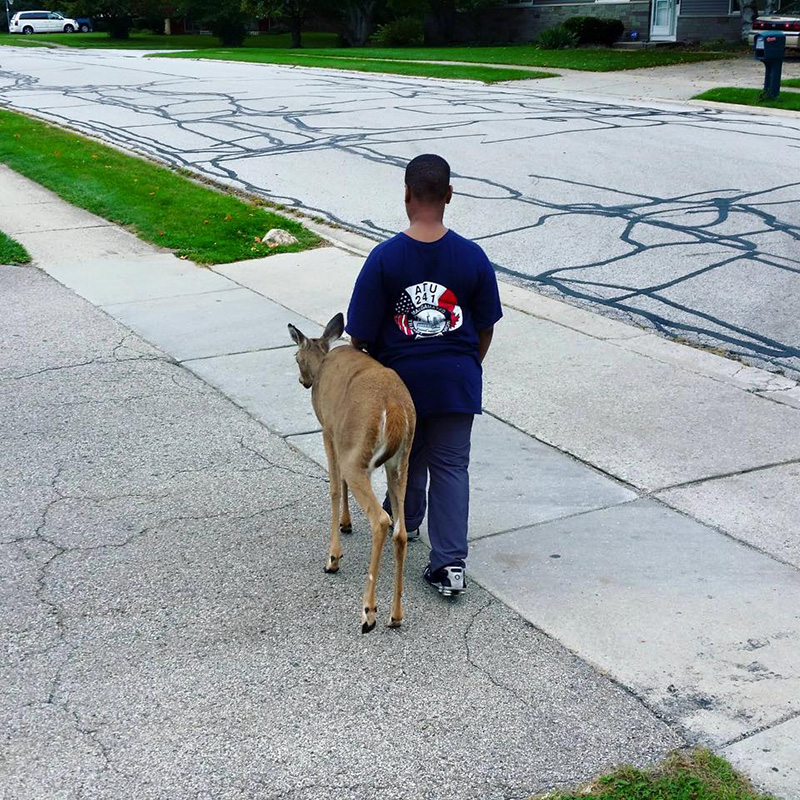 boy walks blind deer