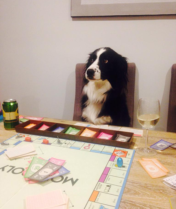 dog playing monopoly