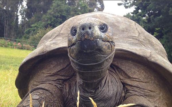 jonathan oldest tortoise