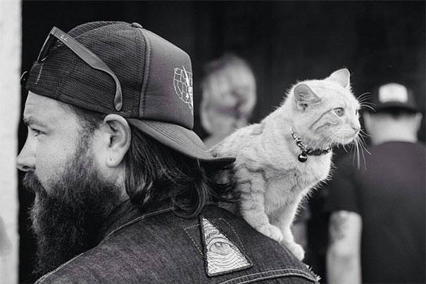 biker takes kitten on road trip