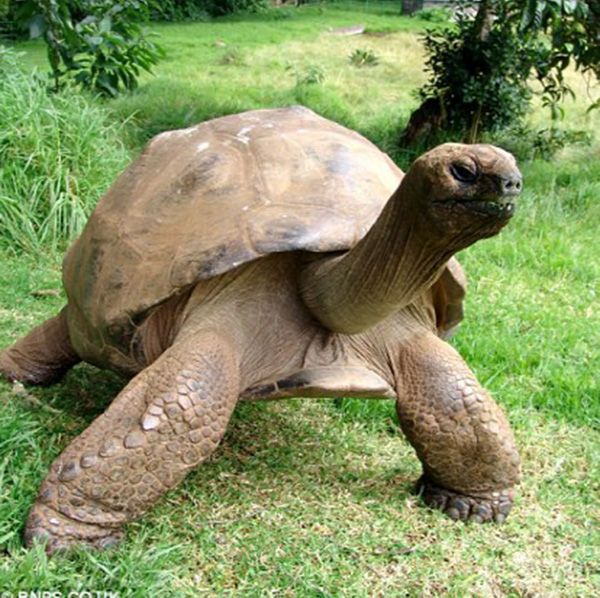 oldest turtle in the world