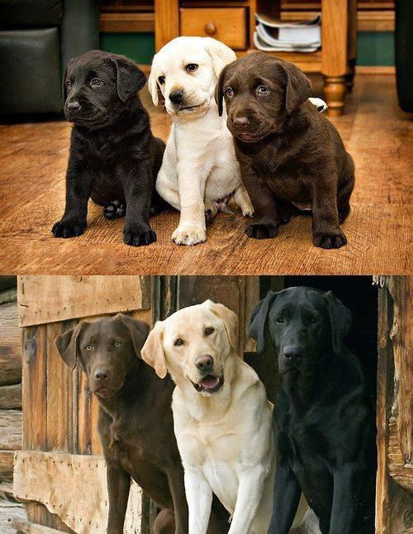 dog best friends from puppies to adults