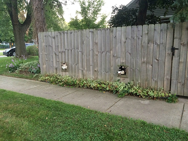 dog windows in fence