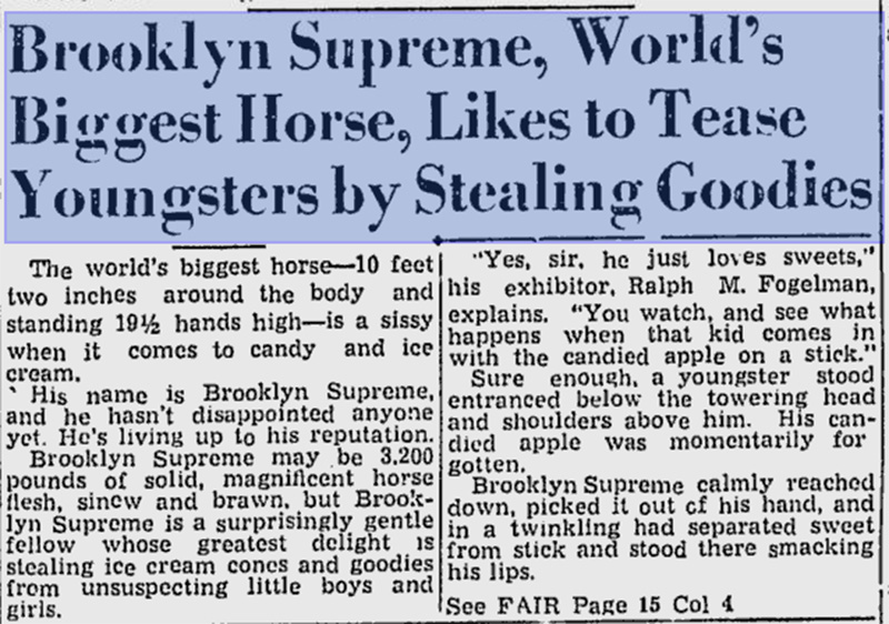 worlds largest horse brooklyn supreme