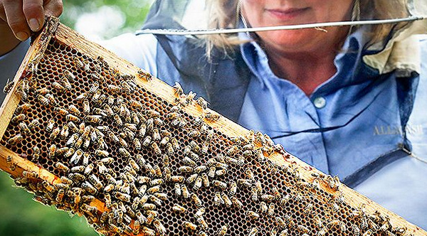 bees win in court