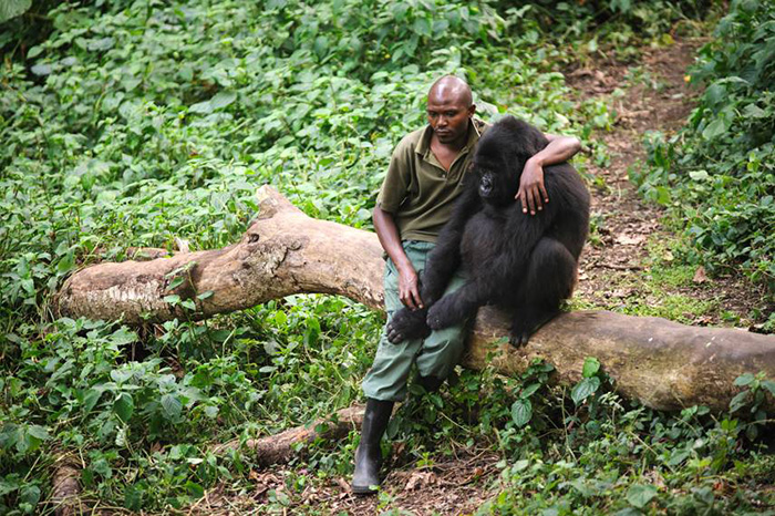 orphaned gorilla sad about losing his mom