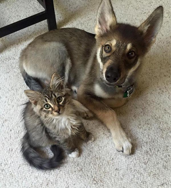 puppy kitten shelter