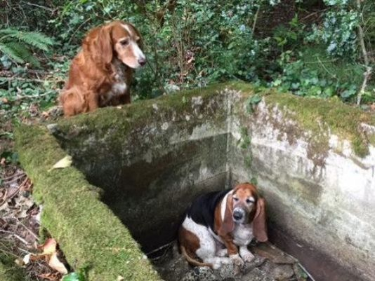 missing dogs found in woods