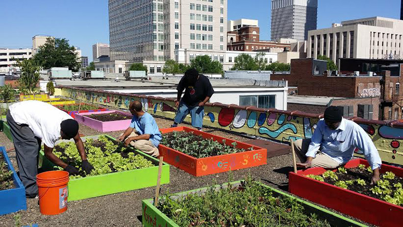 Homeless People Planted A Massive Organic Garden To