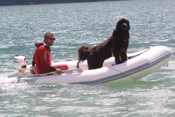 newfoundland coast guard dog Italy