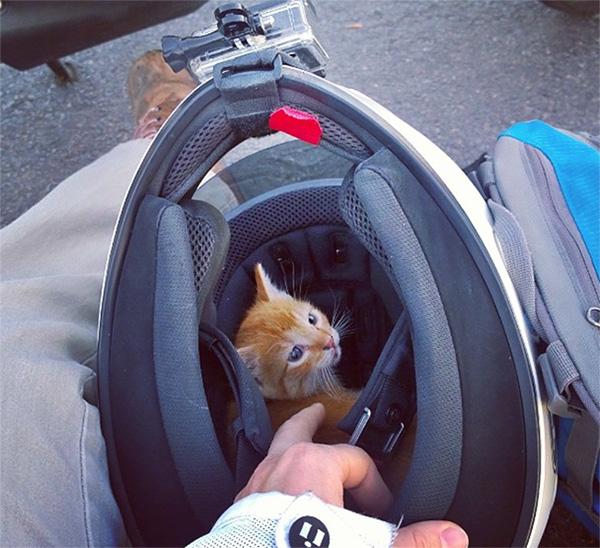 skidmark kitten rescue