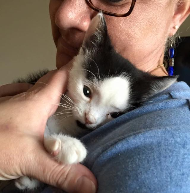 special needs kitten rescue story