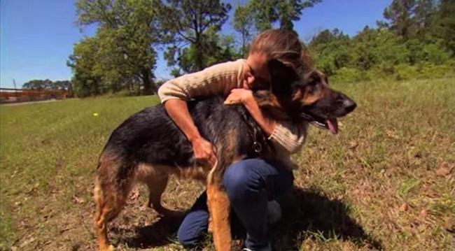 dog saves woman car crash