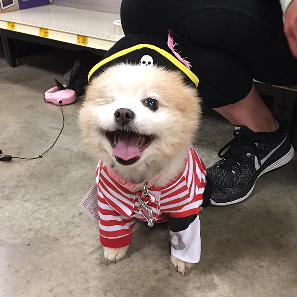 one eyed dog pirate costume & He gave his one-eyed dog the most appropriate costume he could think of