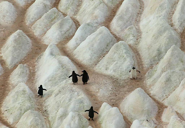 penguins holding hands
