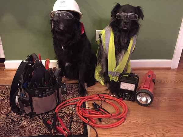 dogs in worker outfits