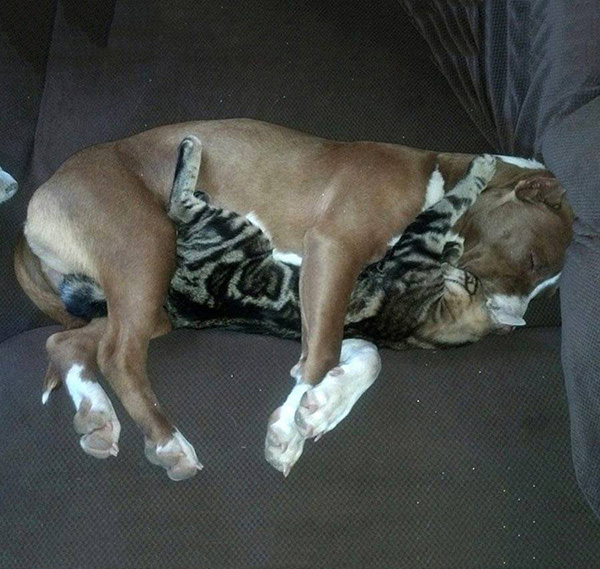 cat cuddles the dog