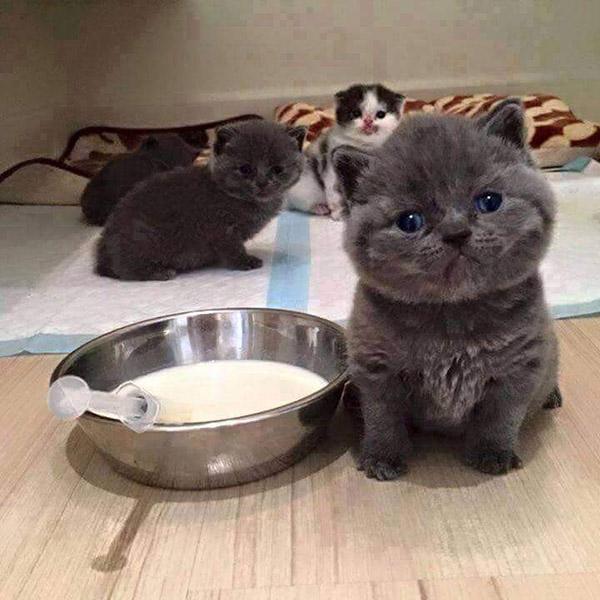 mafia kittens