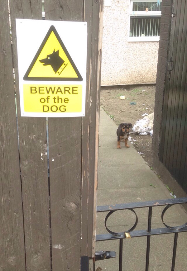 beware of dog funny and cute