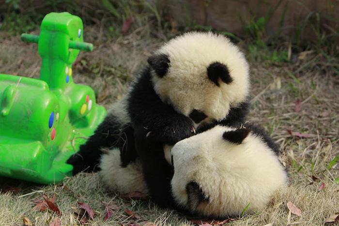 panda daycare