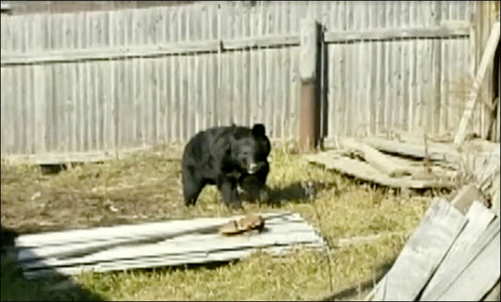 dog saves boys from bear attack