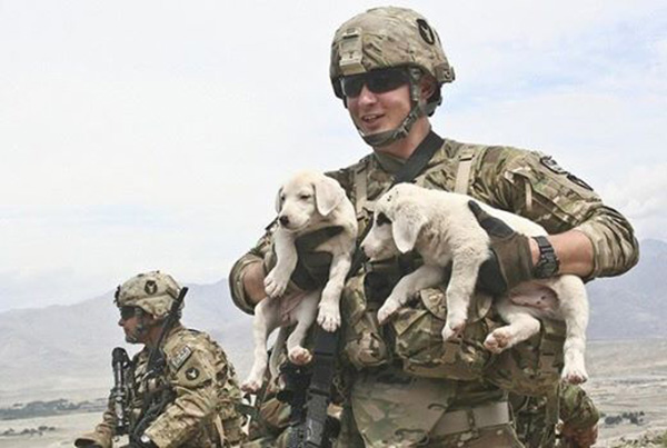 military dogs retire in US
