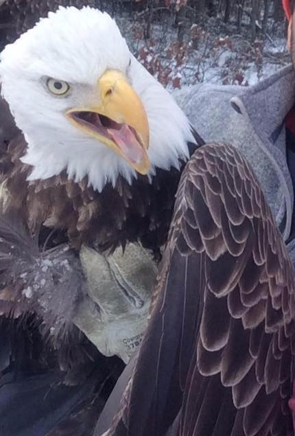 bald eagle rescue selfie