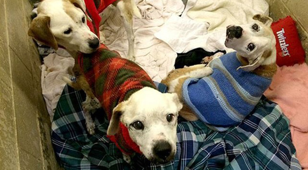 donate ugly sweaters to animal shelters