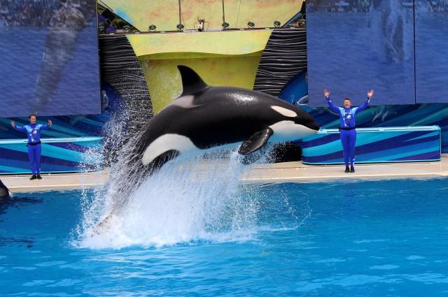 sea world ending orca shows