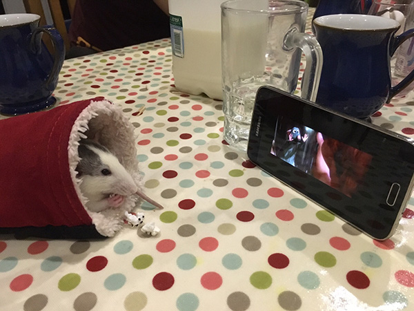 rat watching movie