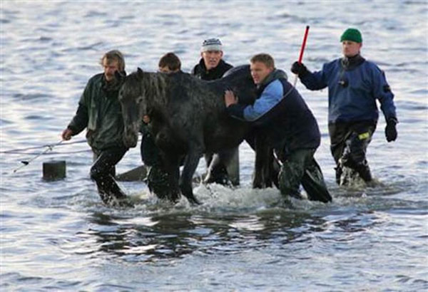 brave women save horses from island netherlands