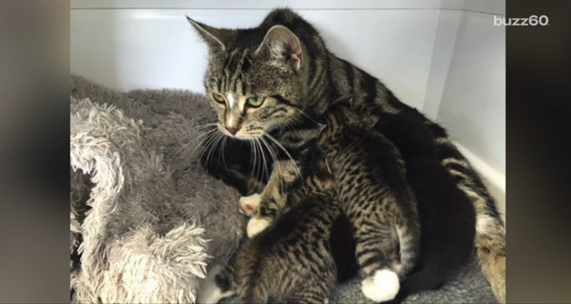 mama cat breaks in to rescue her kittens